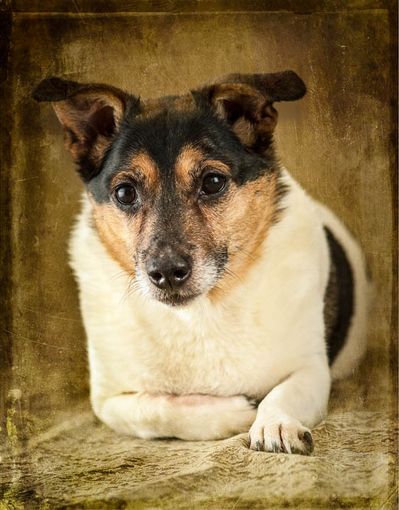 pet_portraits_Quinte_Studios_MGP7876-Edit